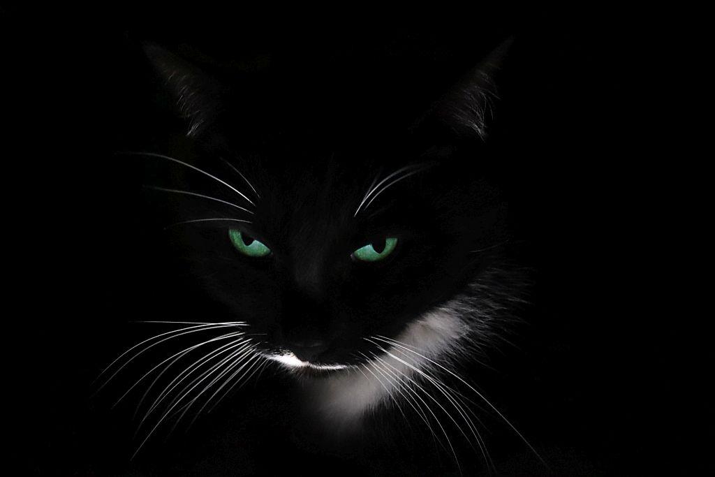 Портрет моего котика. Блиц: кошки против собак