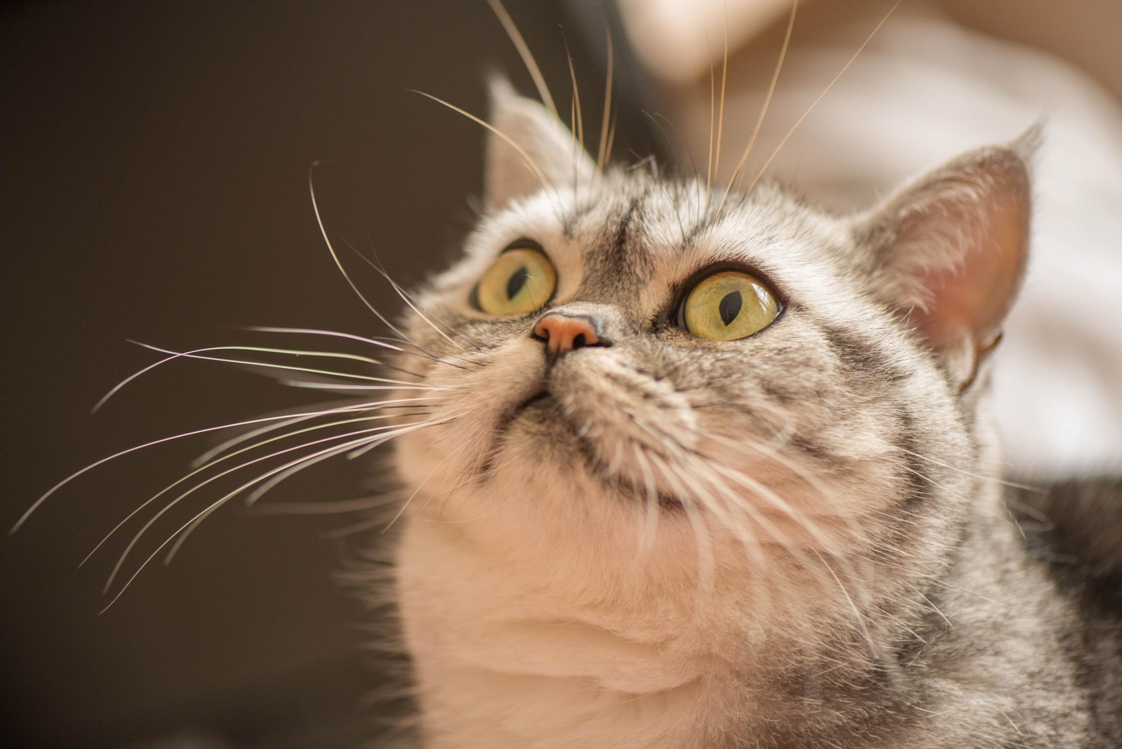 МурМяу . Блиц: кошки против собак
