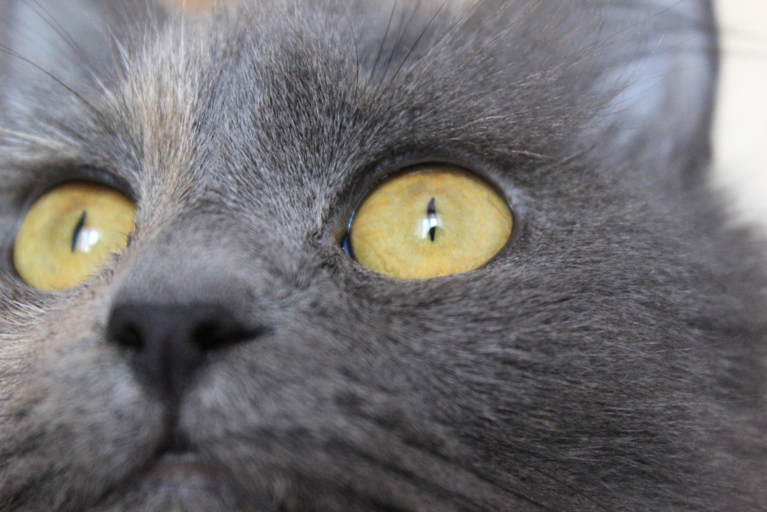 Норрис . Блиц: кошки против собак