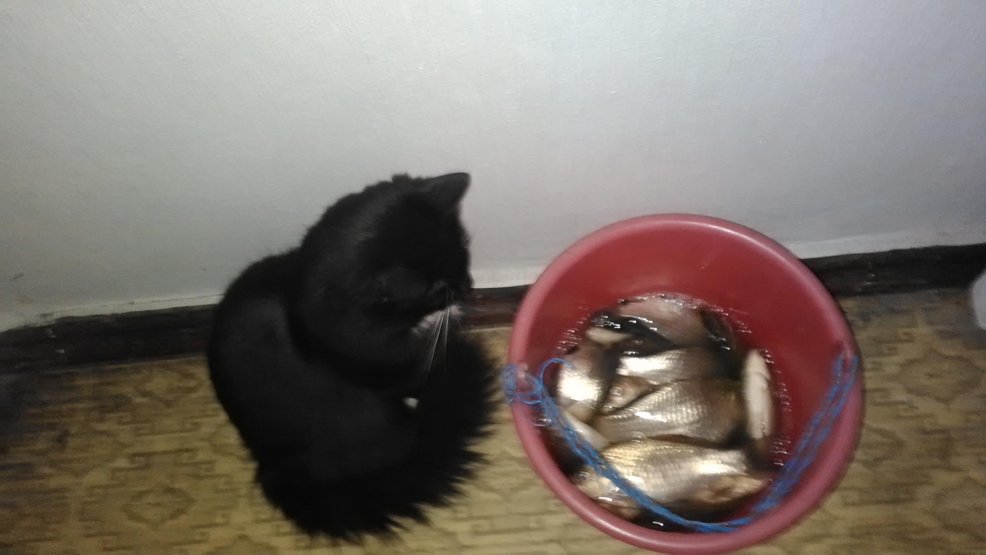 сколько много рыбы-неужели это всё моё..... Блиц: кошки против собак