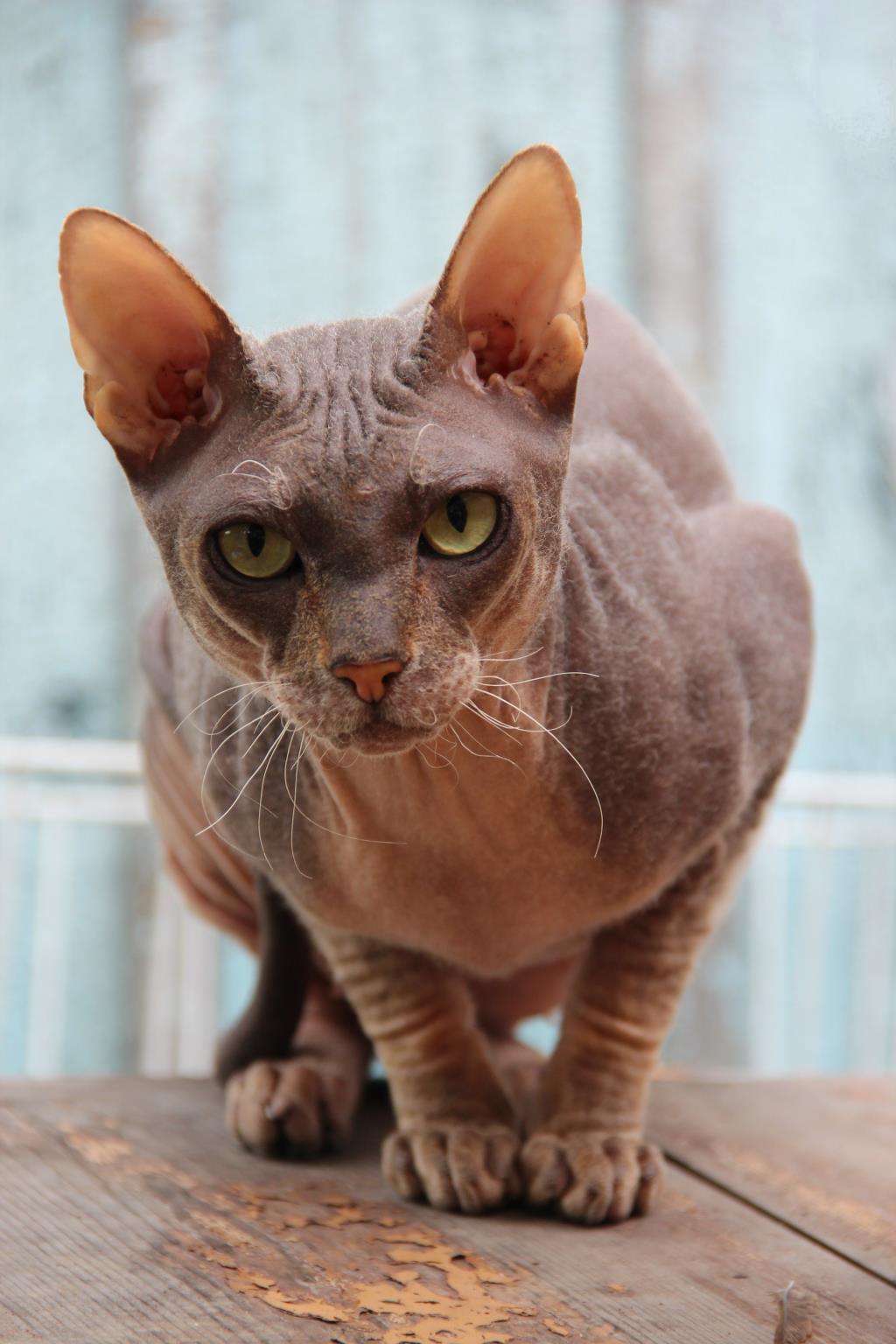 Гипнотезер. Блиц: кошки против собак