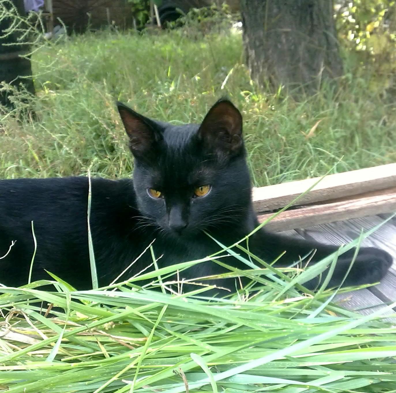 Черныш-наш дачный кот)). Блиц: кошки против собак