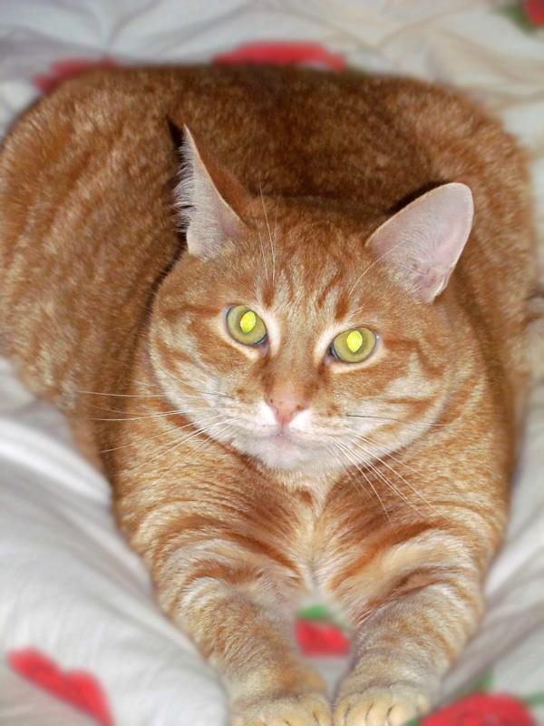 Хорошего кота должно быть много. Блиц: кошки против собак