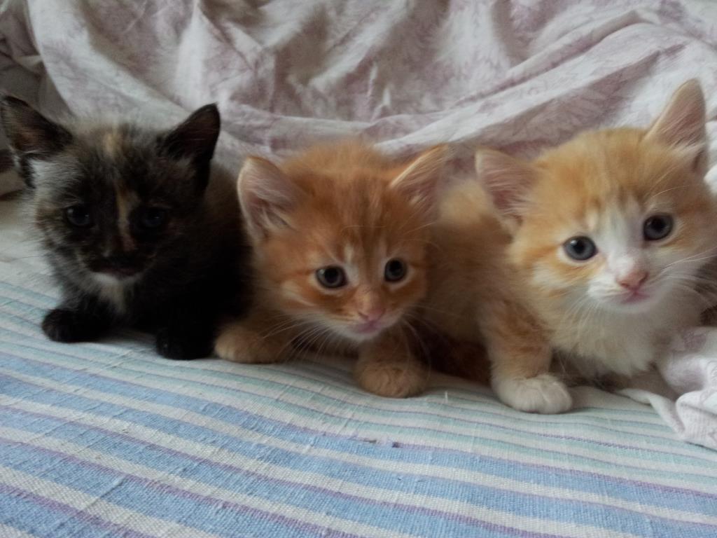 Царство котят. Блиц: кошки против собак