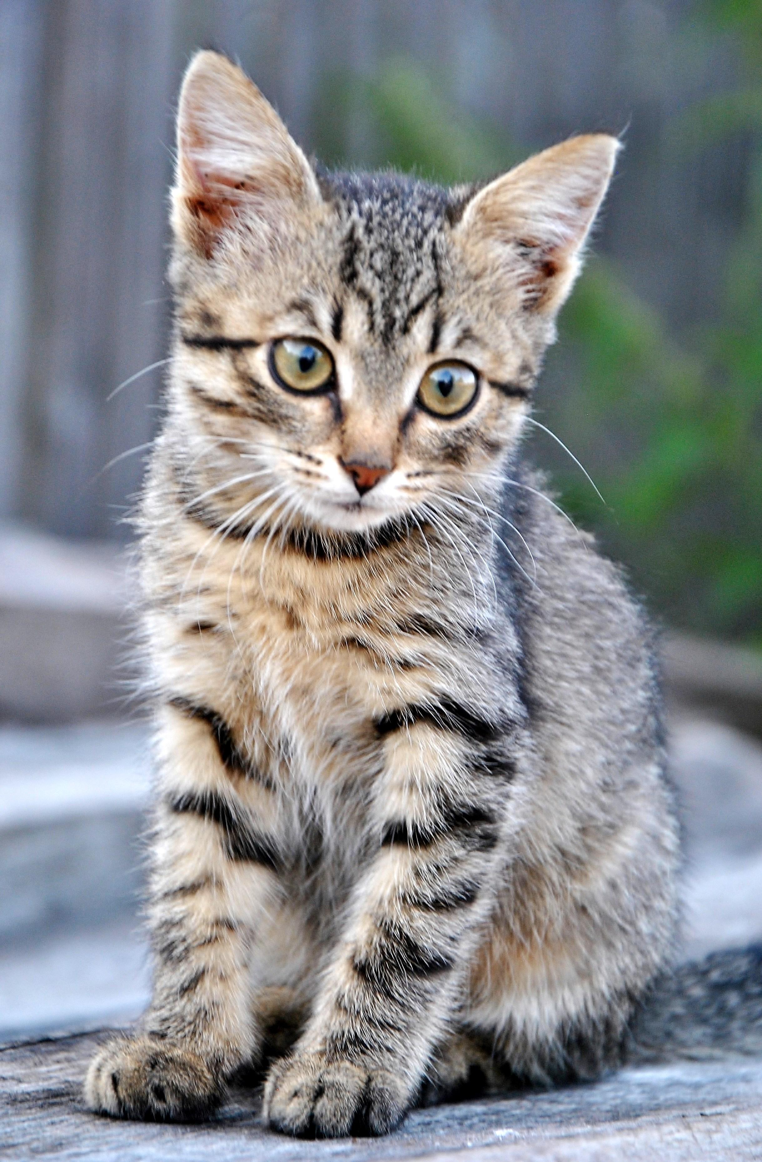 Мурлындик на прогулке. Блиц: кошки против собак