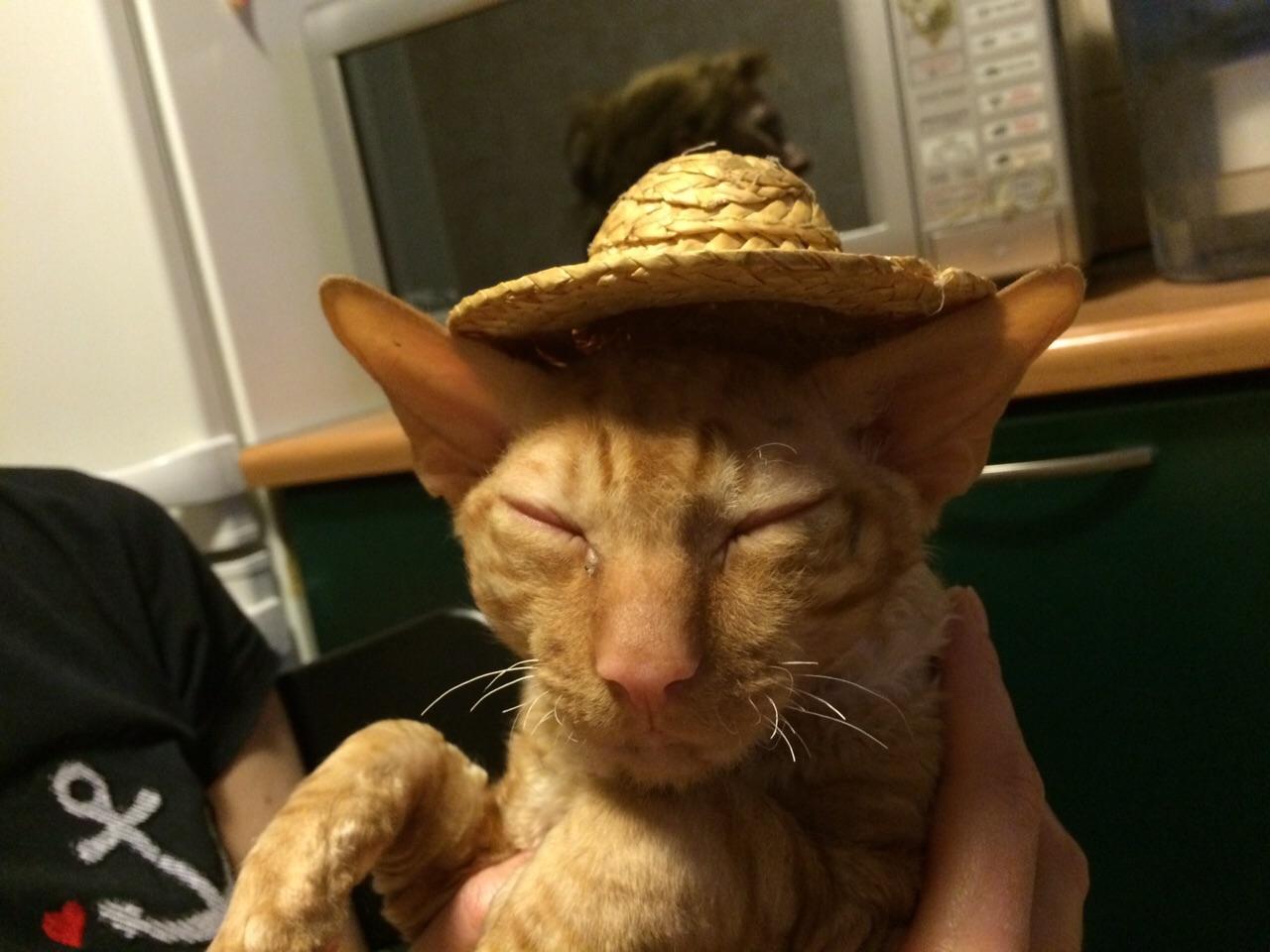 Выходя из дома не забывайте свои шляпы!. Блиц: кошки против собак