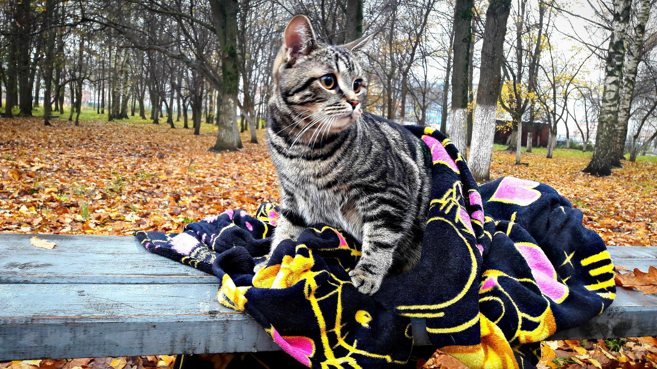 Осенняя прогулка. Блиц: кошки против собак