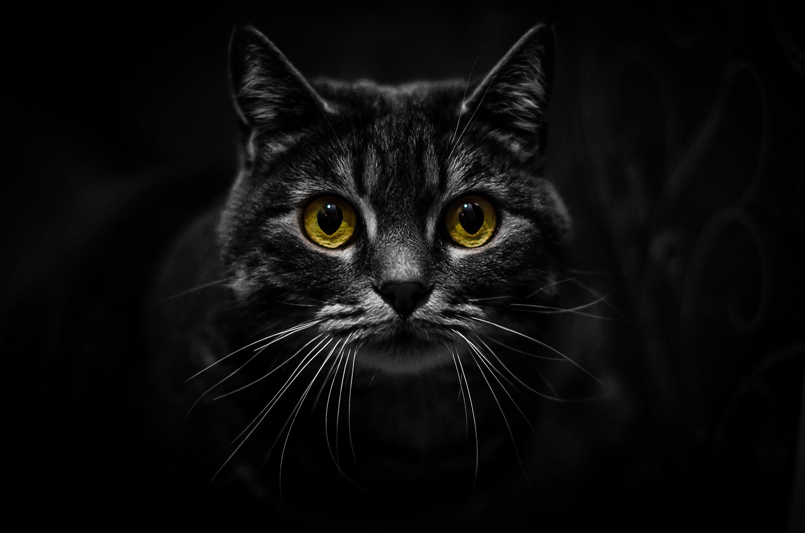 Эти глаза напротив. Блиц: кошки против собак