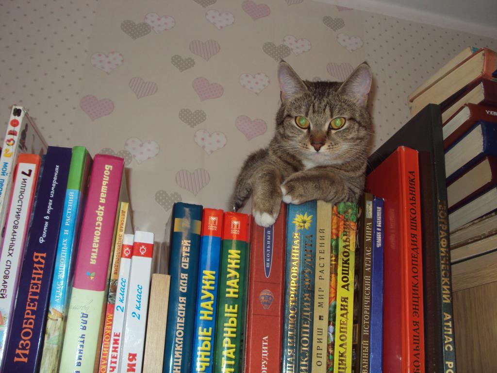 Какую книжку сегодня почитать?. Блиц: кошки против собак