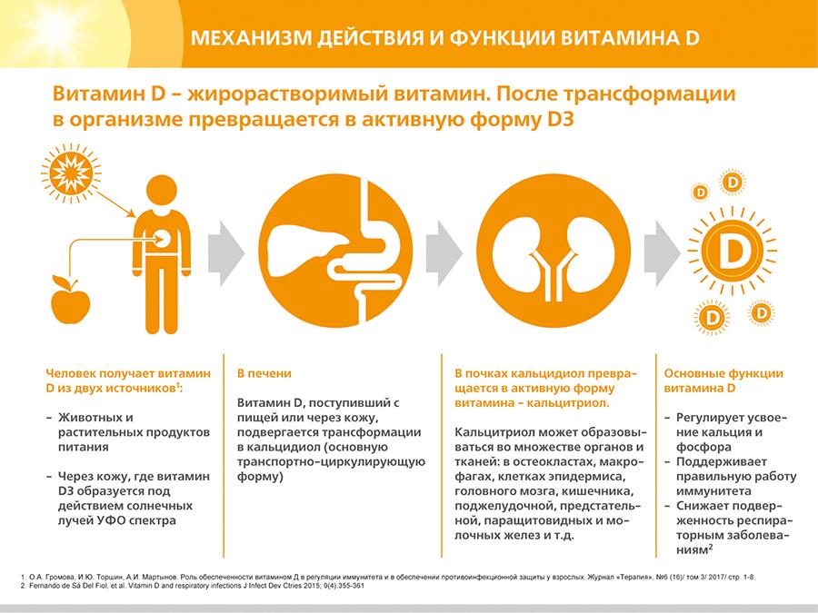 Механизм действия витамина Д