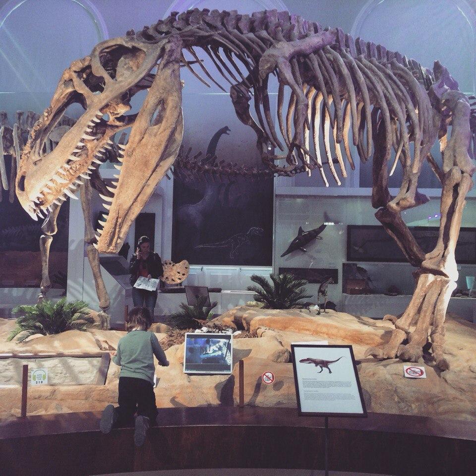 Динозавр. Блиц: музейный экспонат