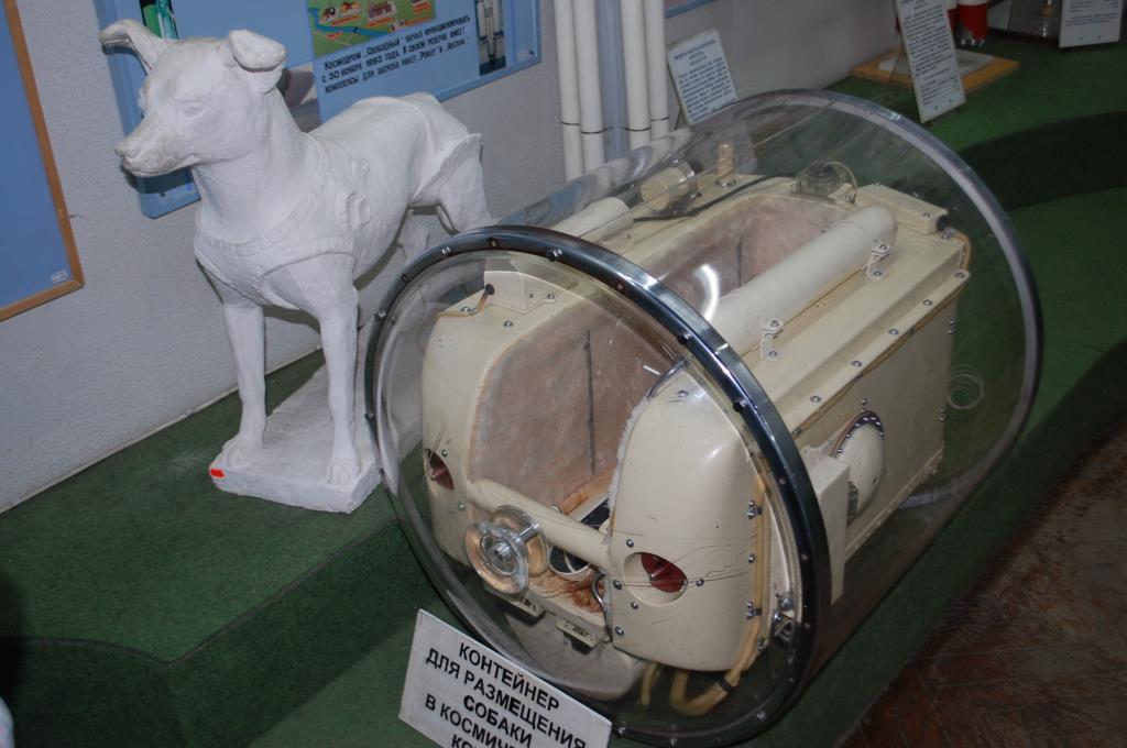 Контенер для собаки в космическом корабле. Блиц: музейный экспонат