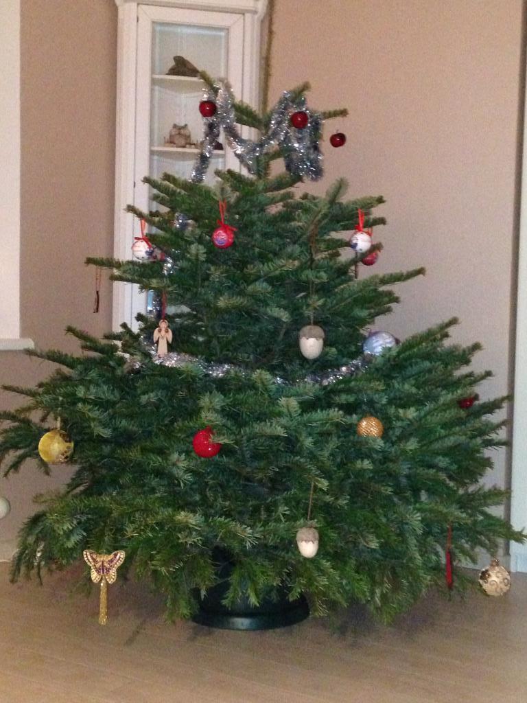 Наша лесная красавица. Блиц: новогодняя елка
