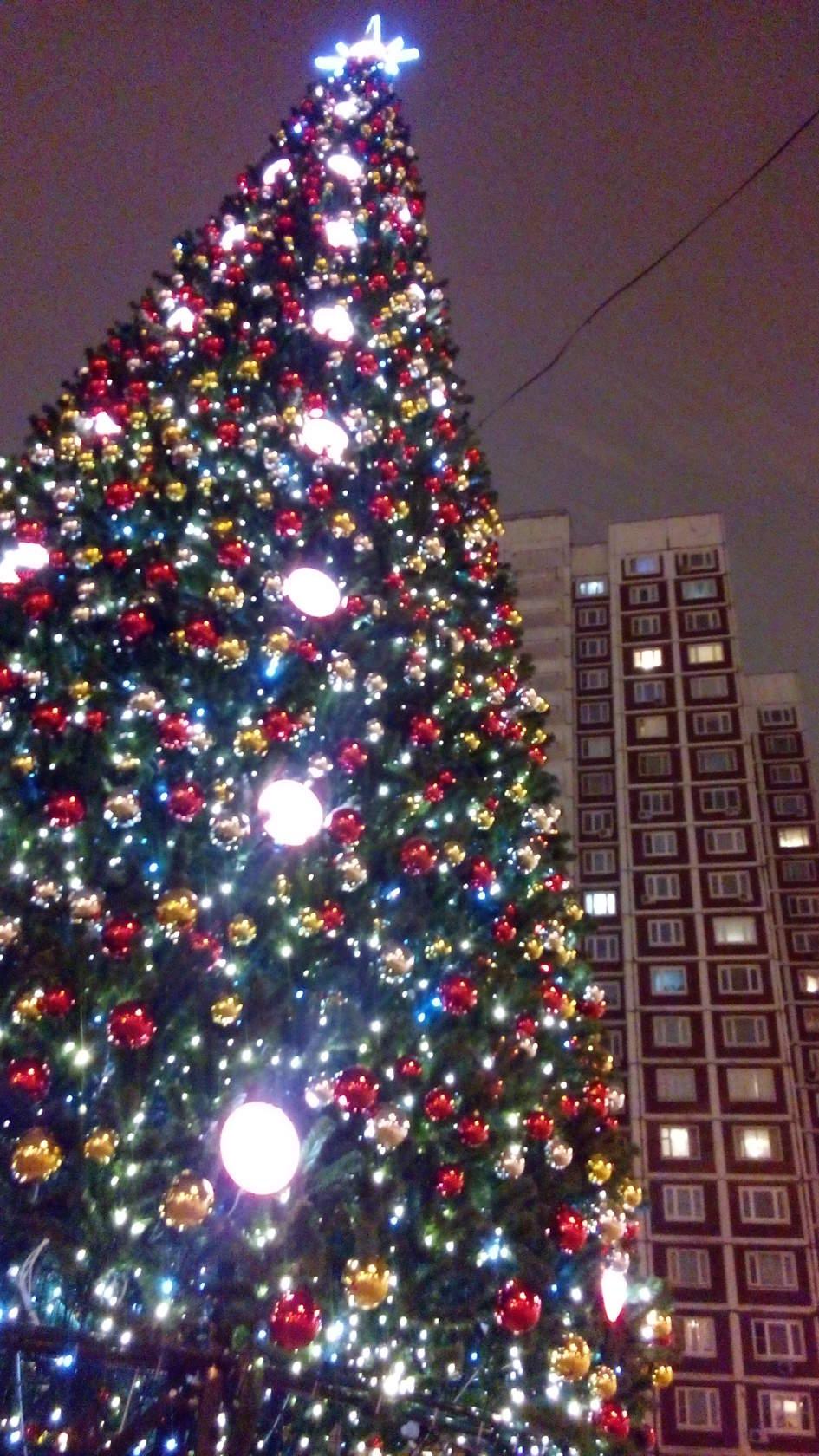 Даешь Новый Год в каждый двор!. Блиц: новогодняя елка