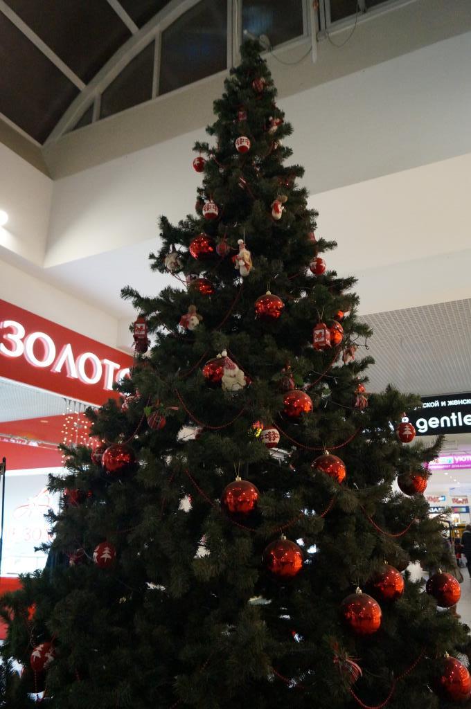 Ёлка моей мечты. Блиц: новогодняя елка