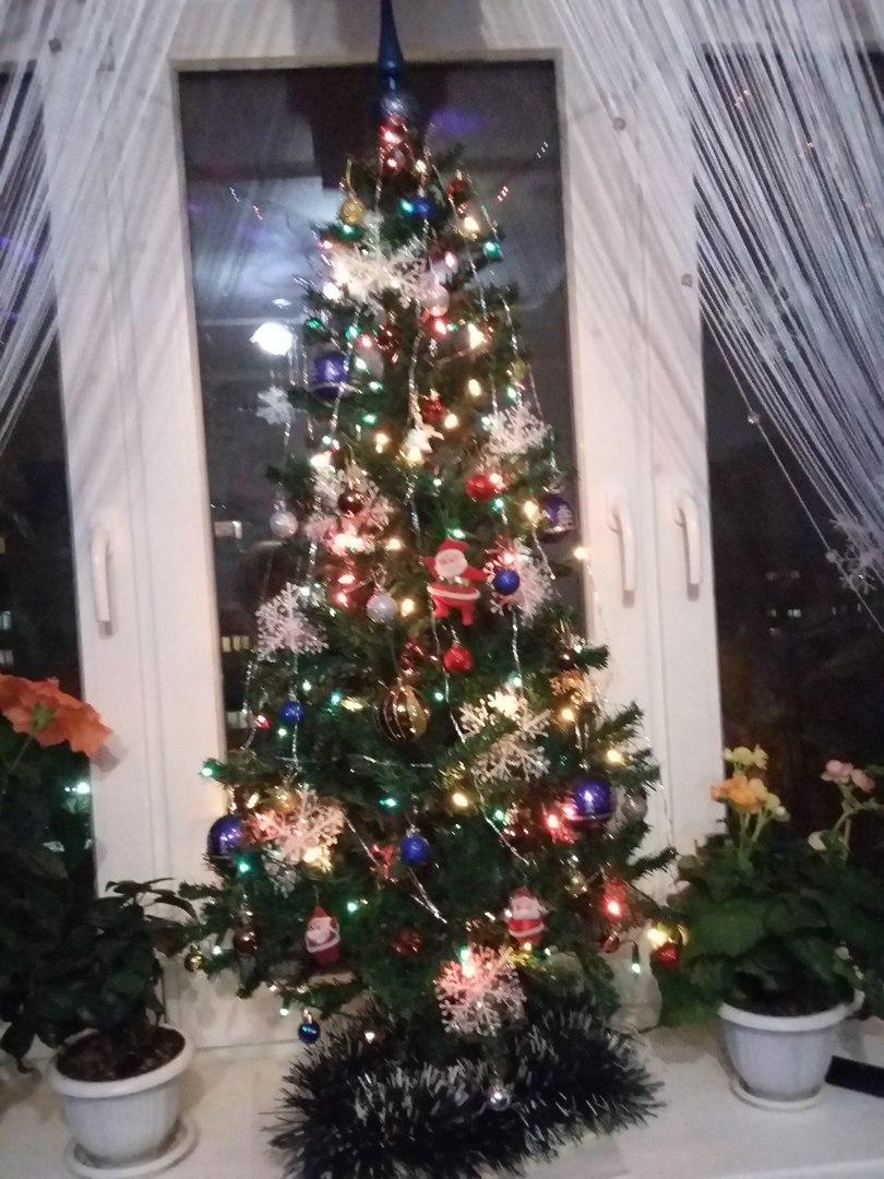 Наша ёлочка красавица!!!. Блиц: новогодняя елка