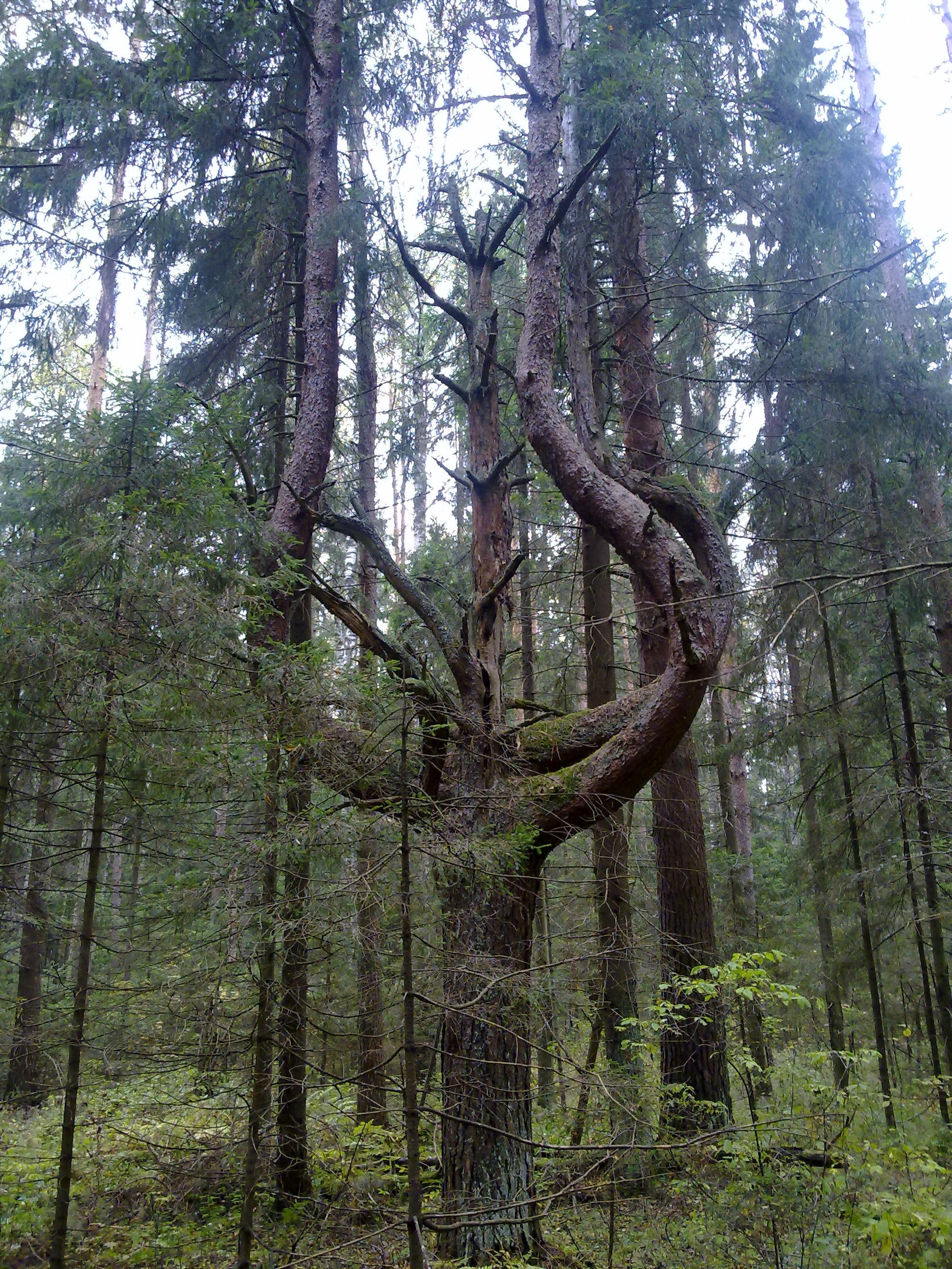 Суровое сердце леса.. Блиц: сердечки