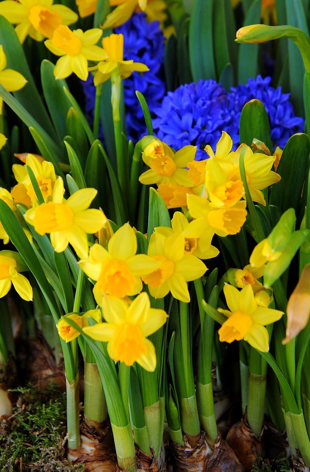 яркие краски весны. Блиц: весна
