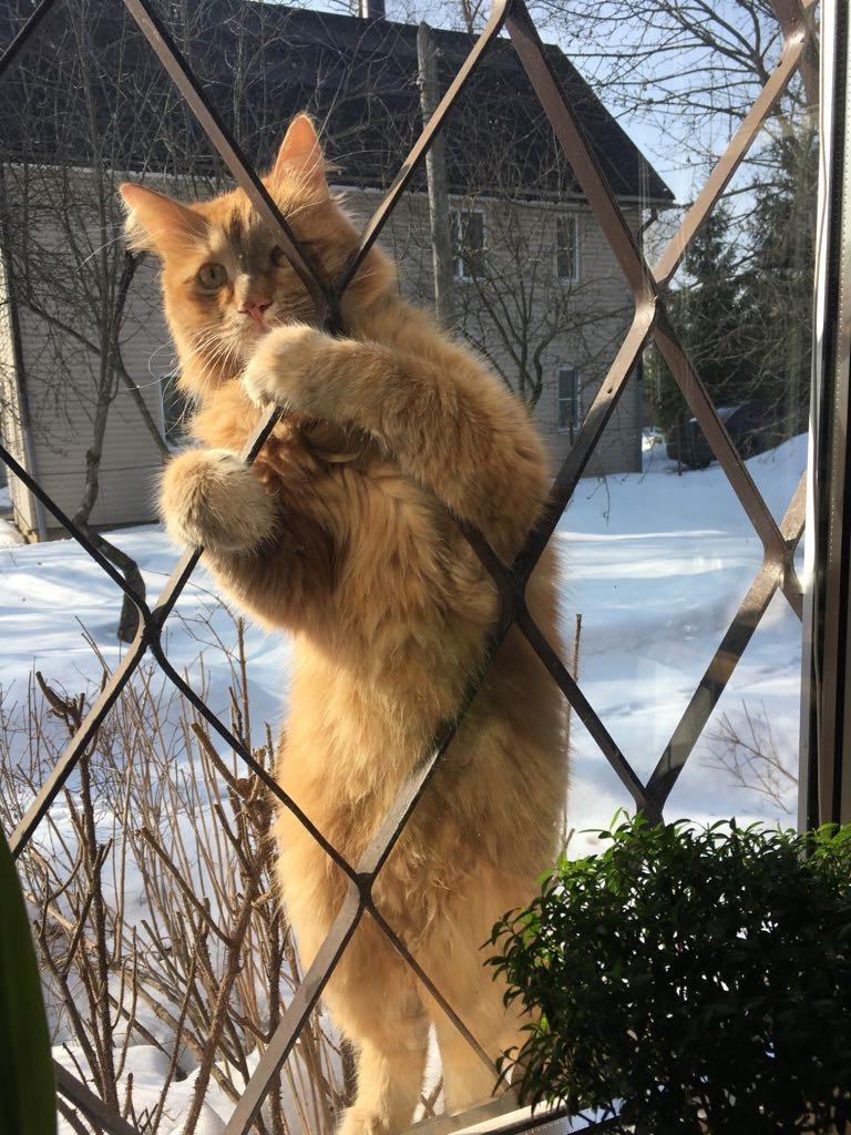 Весна! Коты прилетели!). Блиц: весна