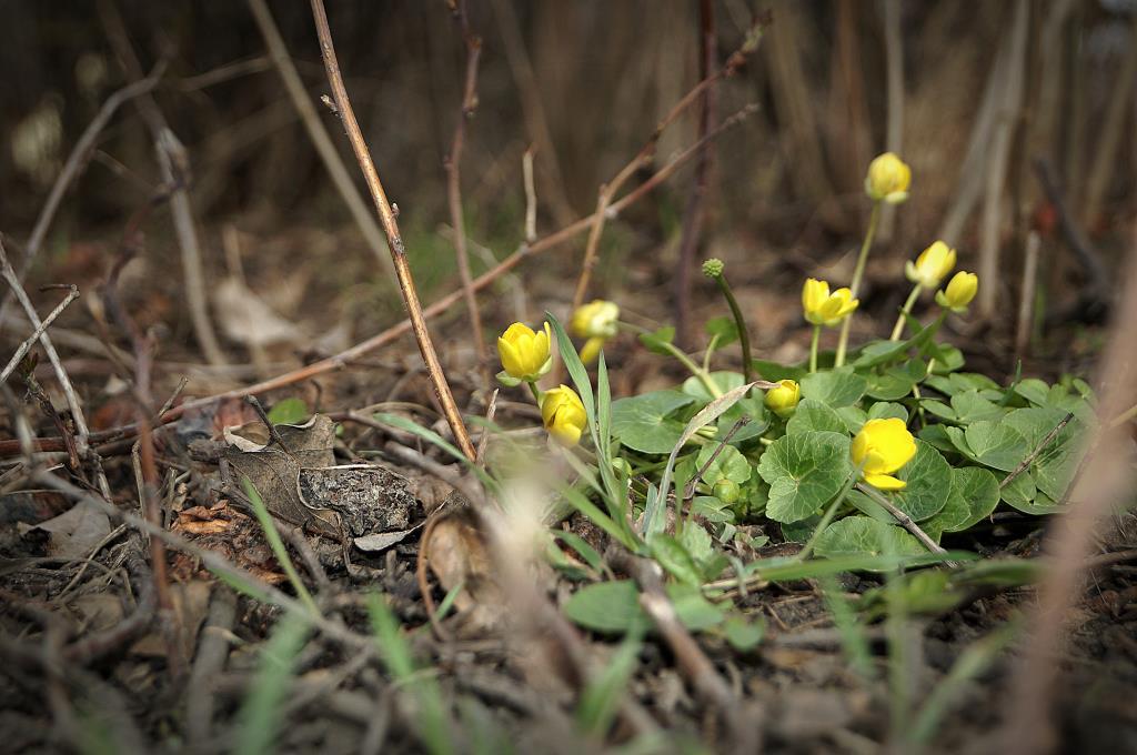 пробуждение. Блиц: весна