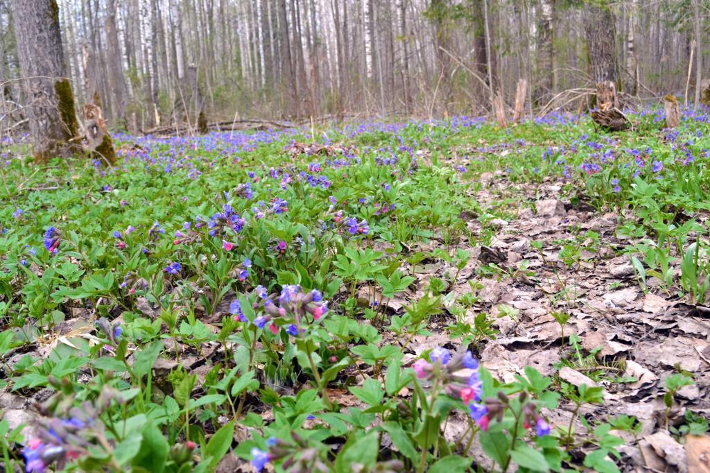 Весенний ковер из цветов. Блиц: весна