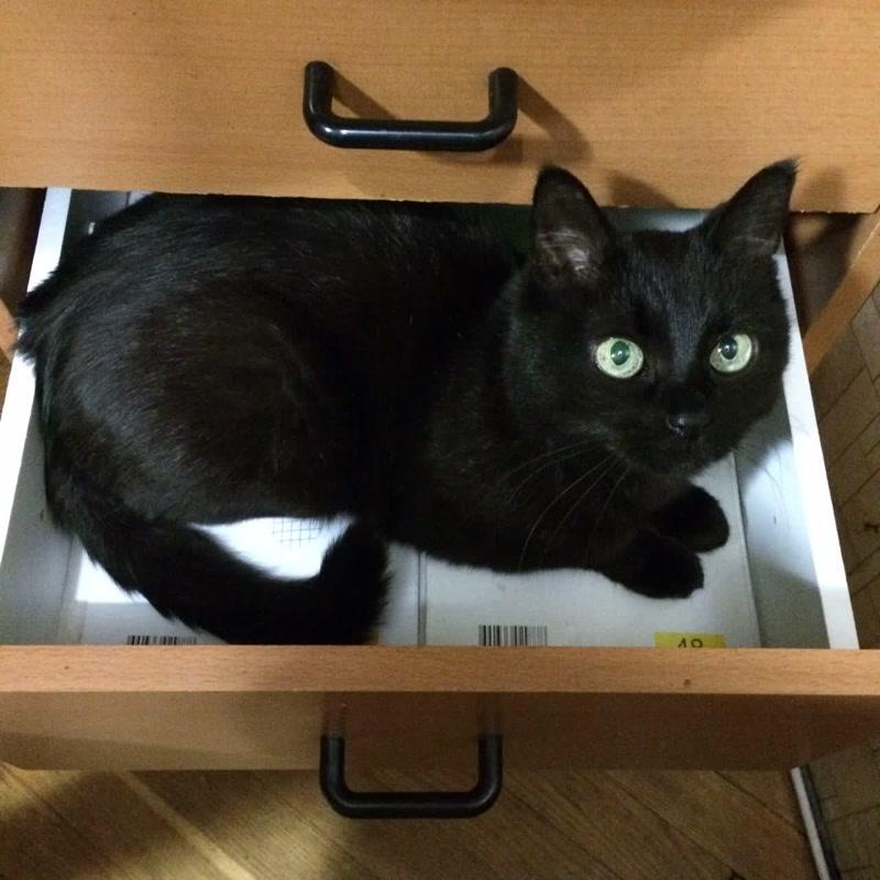 Кошка Нюшка