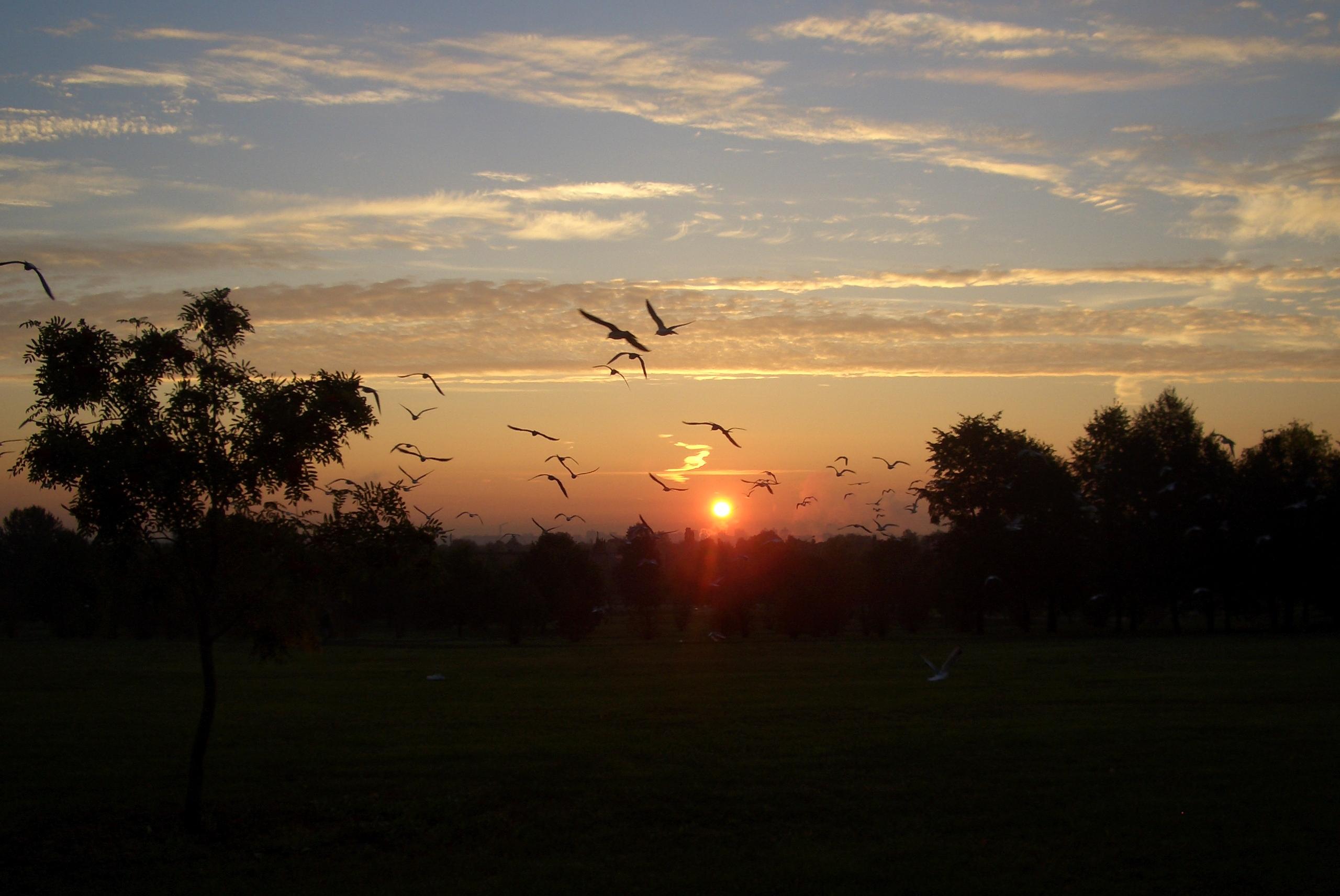 Небо и чайки. Блиц: облака