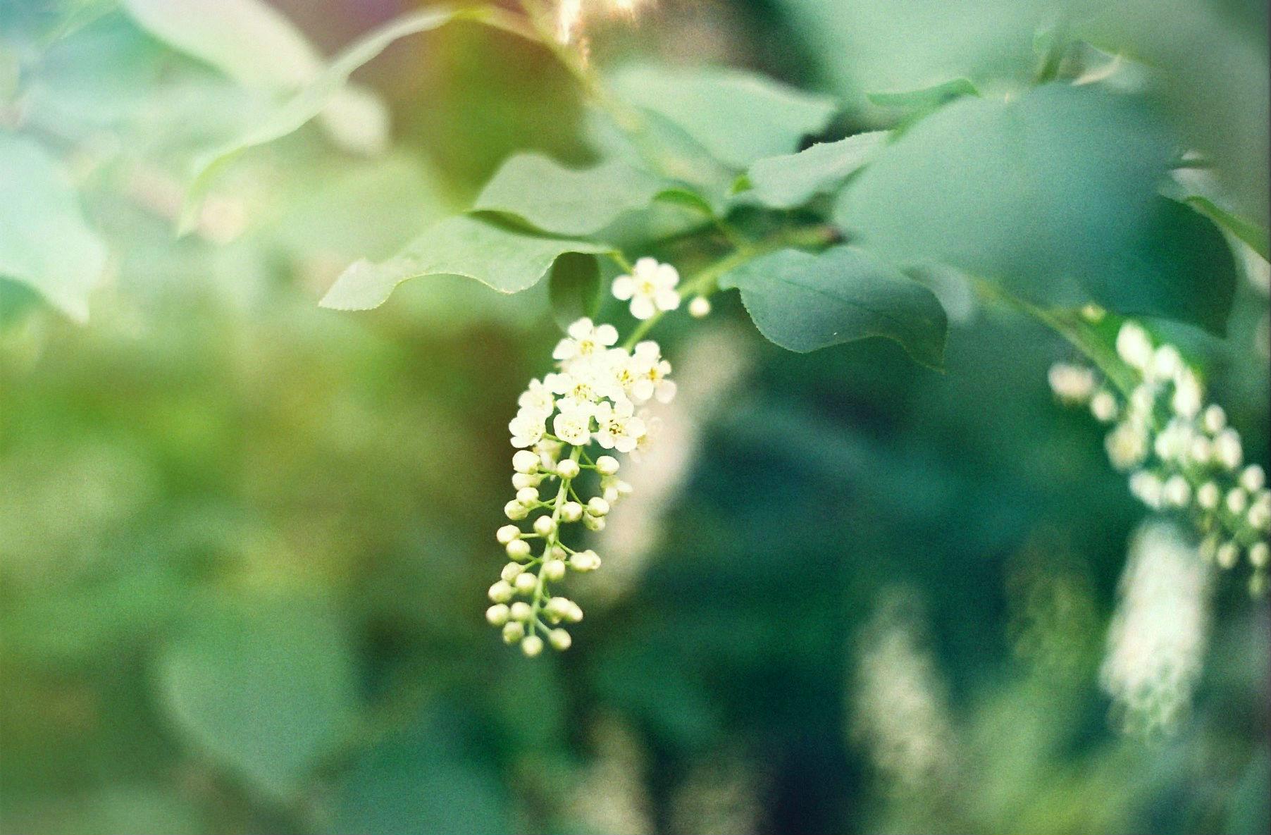 Нежность весны. Блиц: цветение