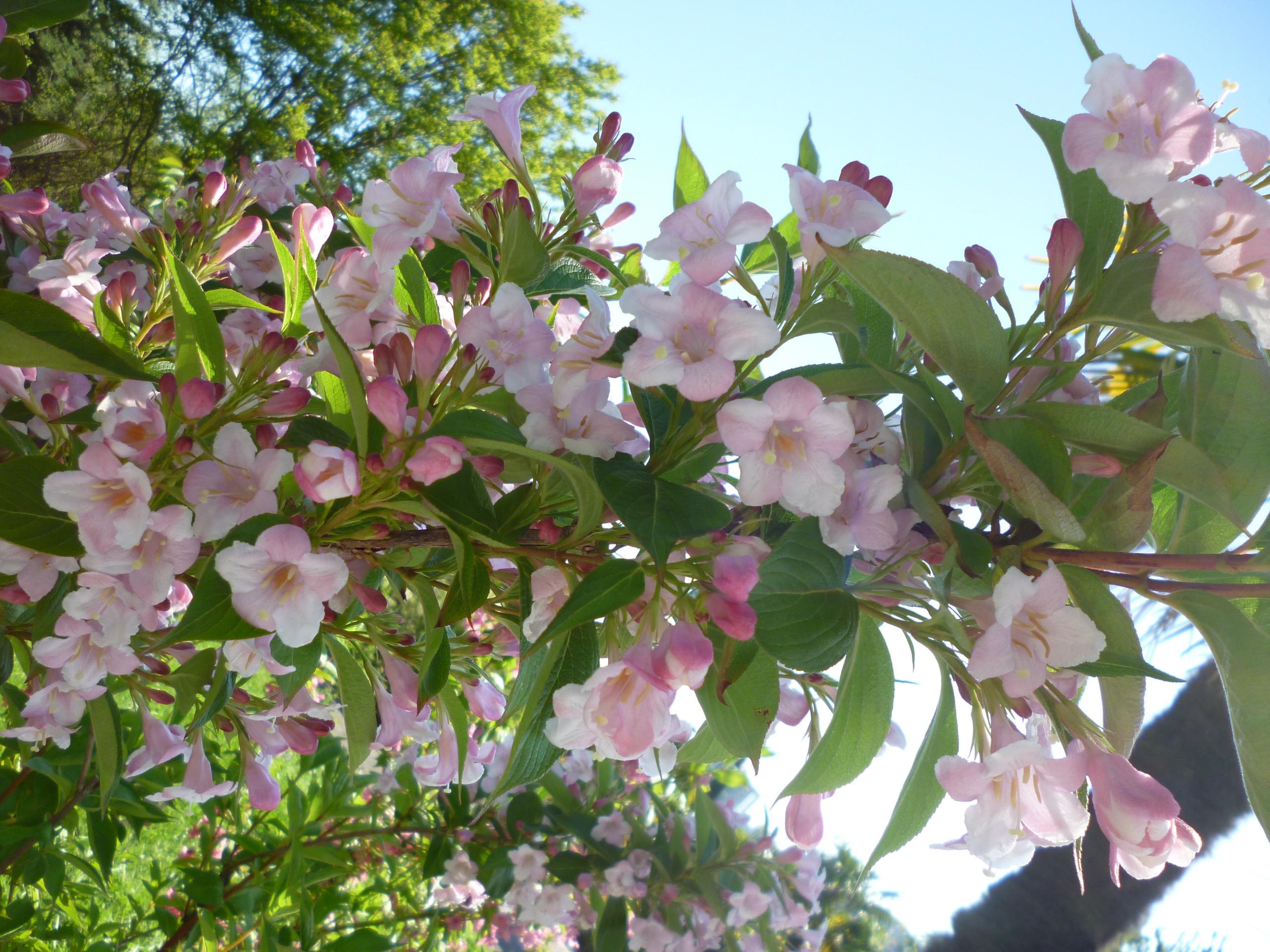 весна. Блиц: цветение
