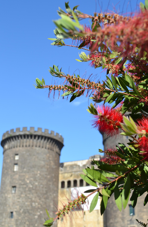 Неаполь в цветах. Блиц: цветение