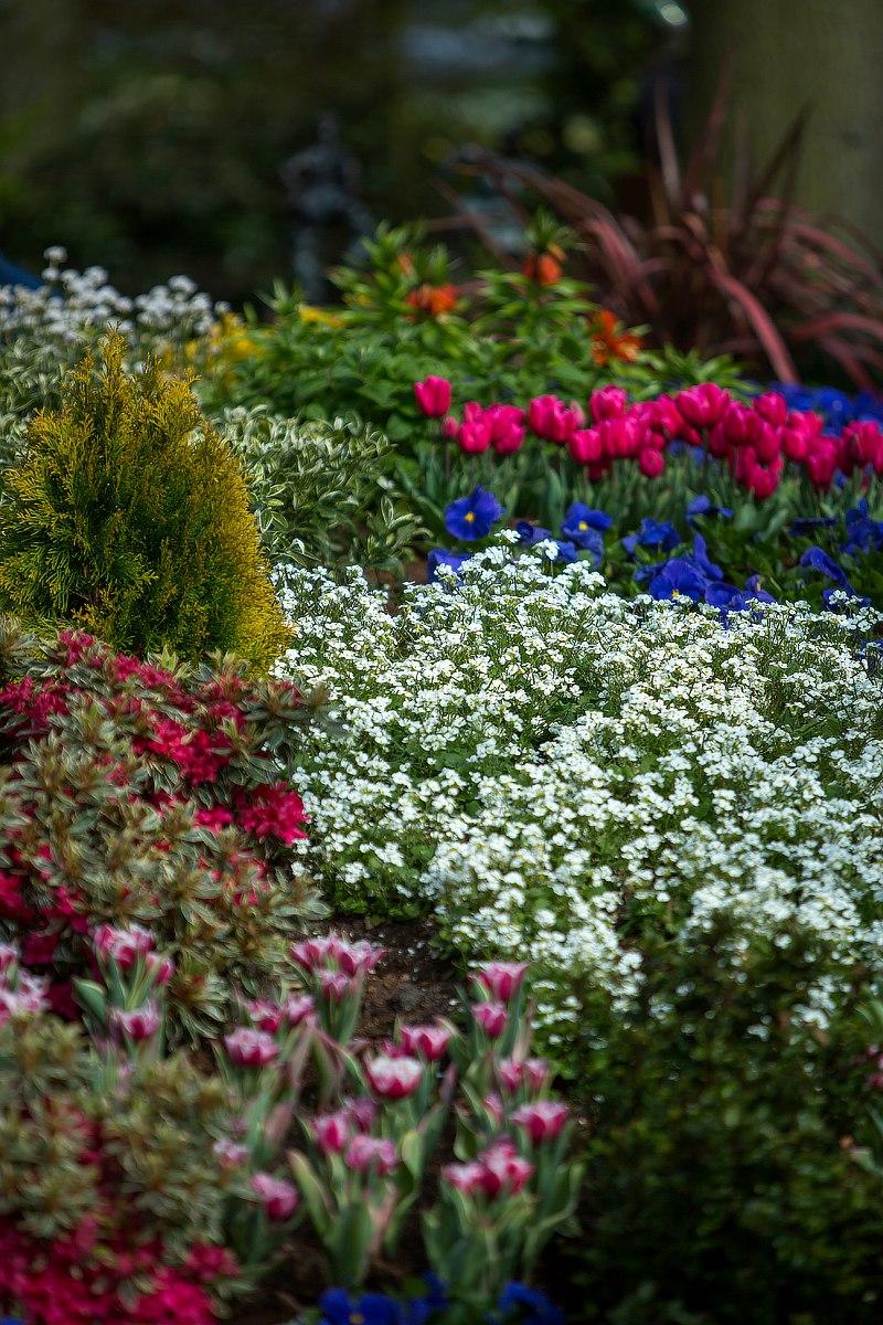 В цветущем саду. Блиц: цветение