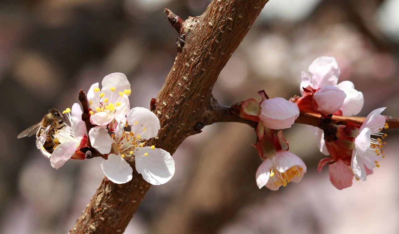 Ароматное цветение!. Блиц: цветение