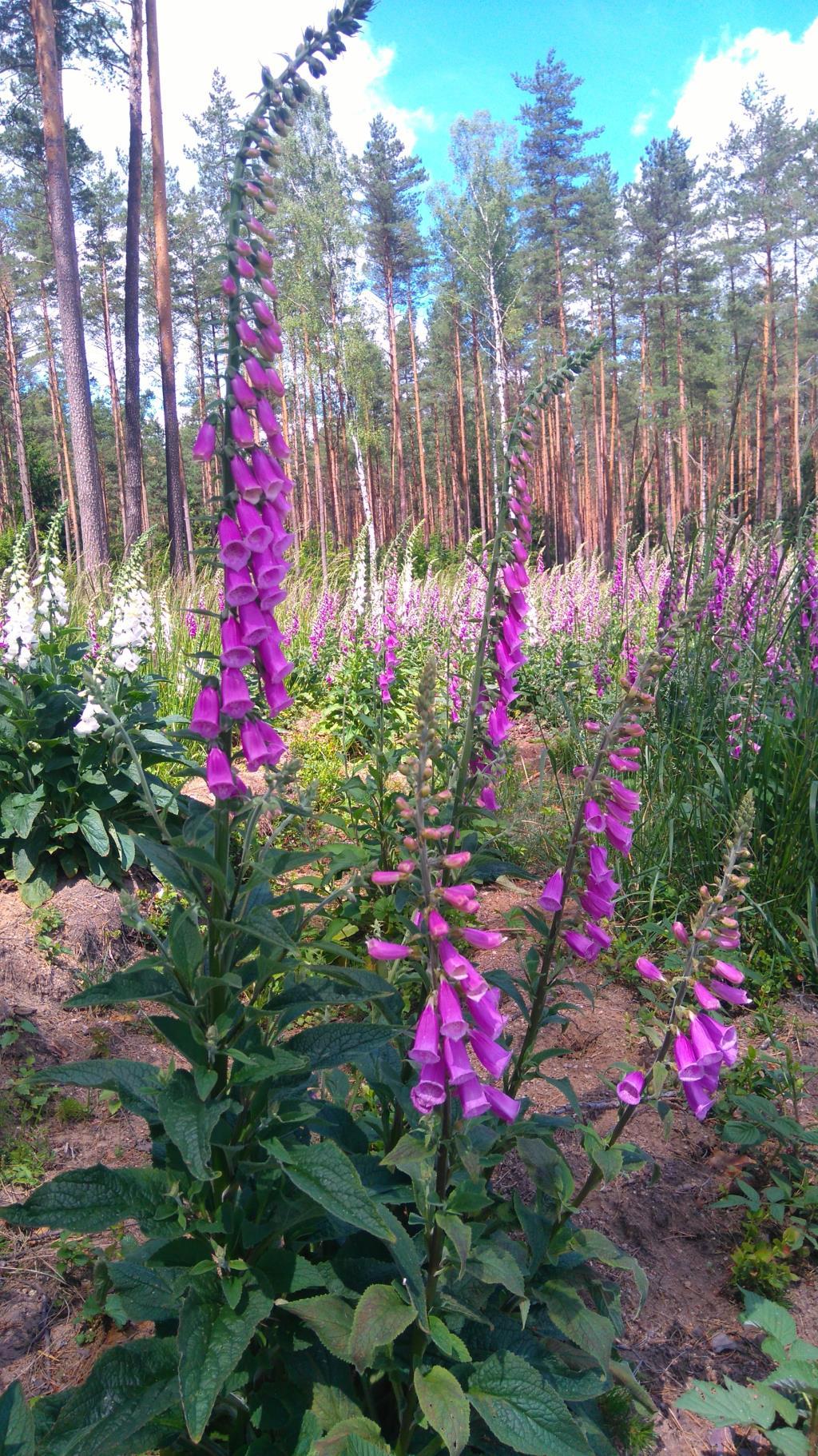 Цветочный огород в лесу. Лесной пейзаж