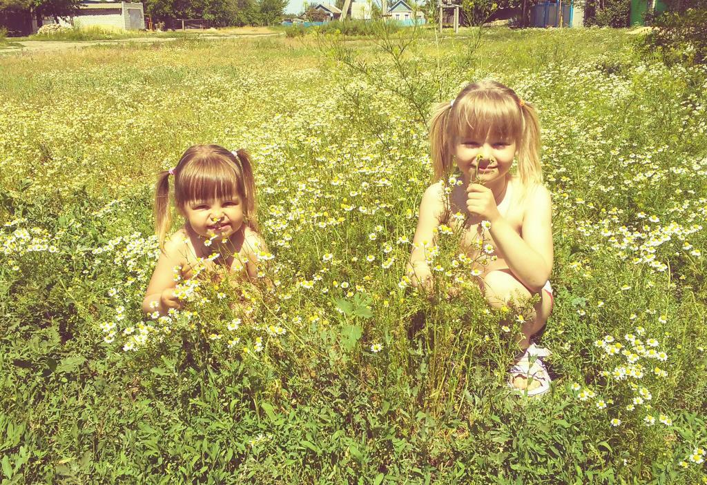 Ромашковое поле..Прекрассное лето... Летнее настроение