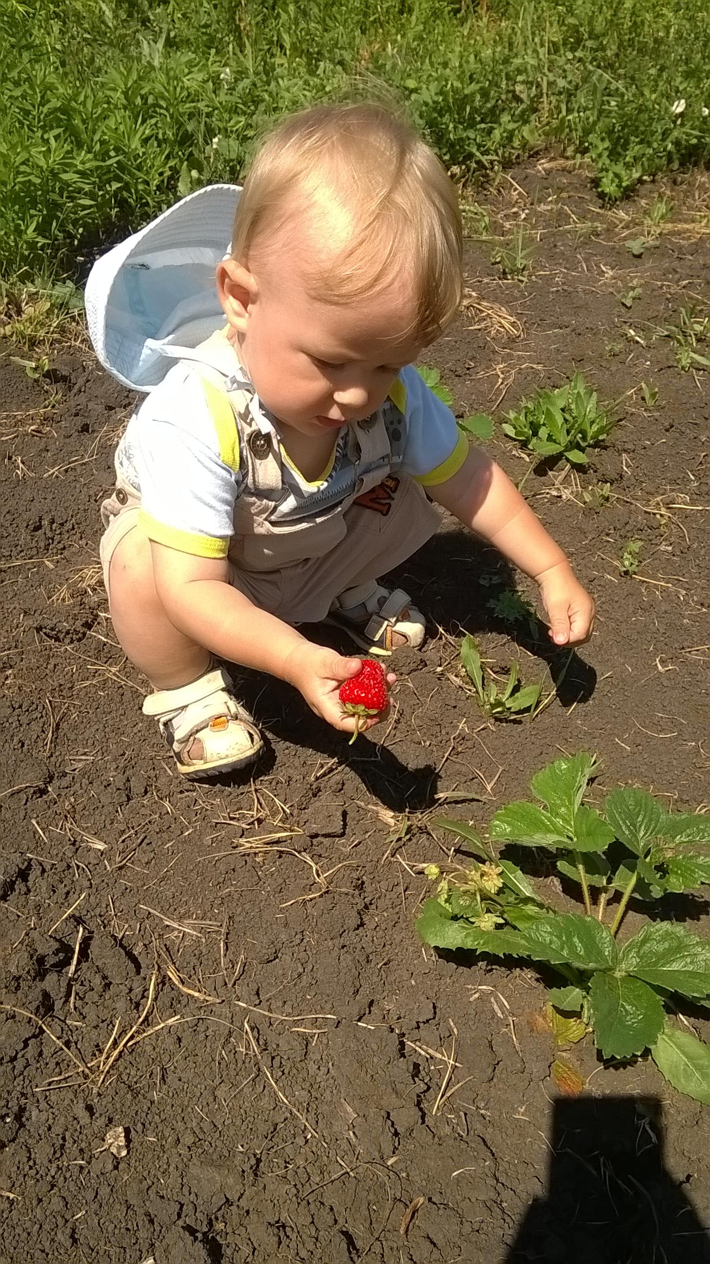 Первая ягодка для малыша))). Летнее настроение