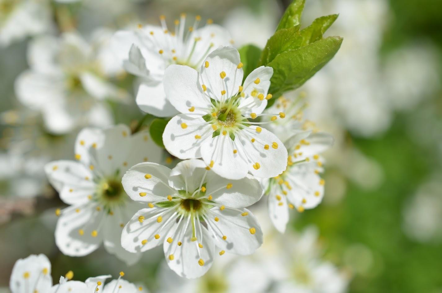 Цветочные веснушки. Блиц: цветение
