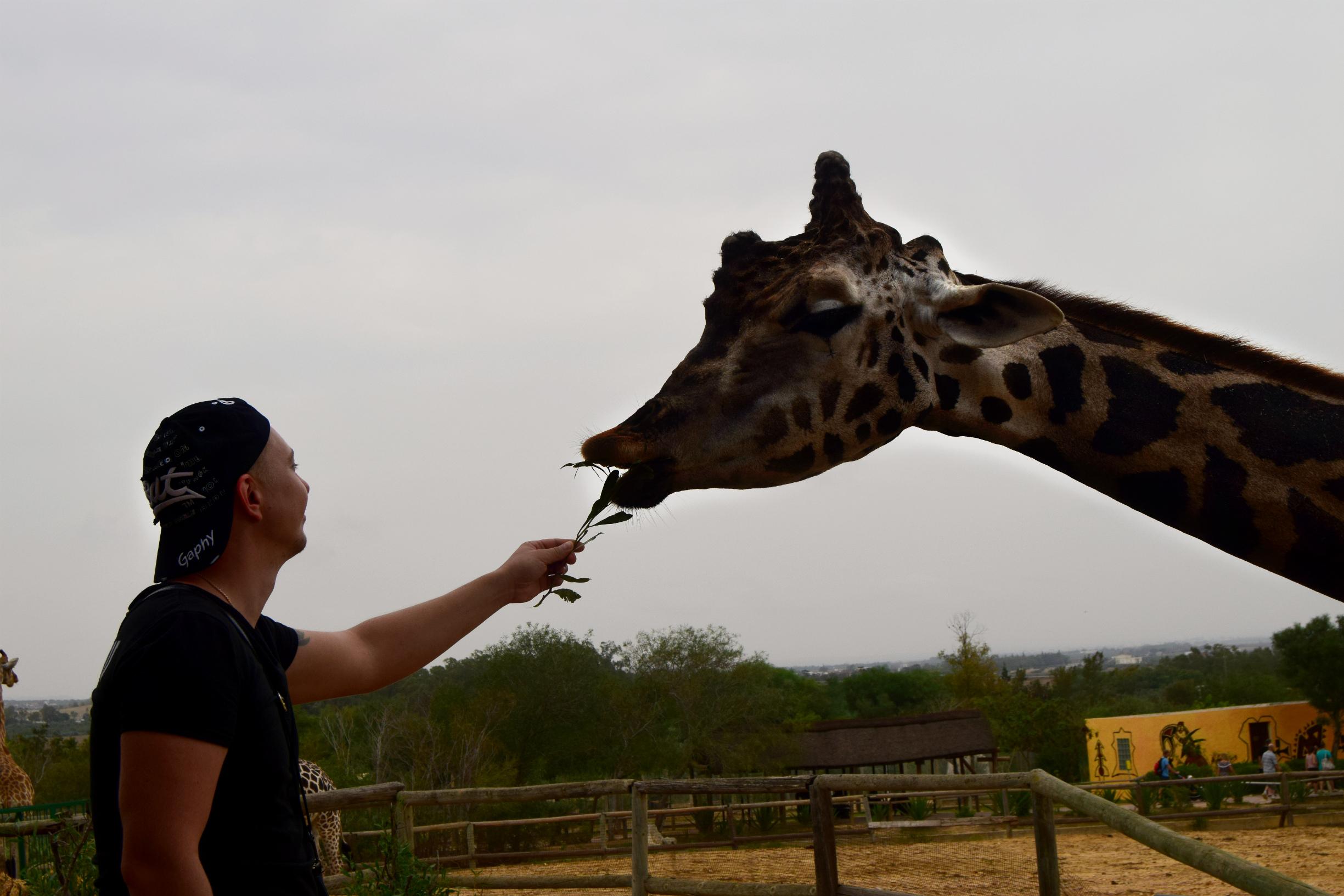 На озере Чад Изысканный бродит жираф.. Привет из отпуска!