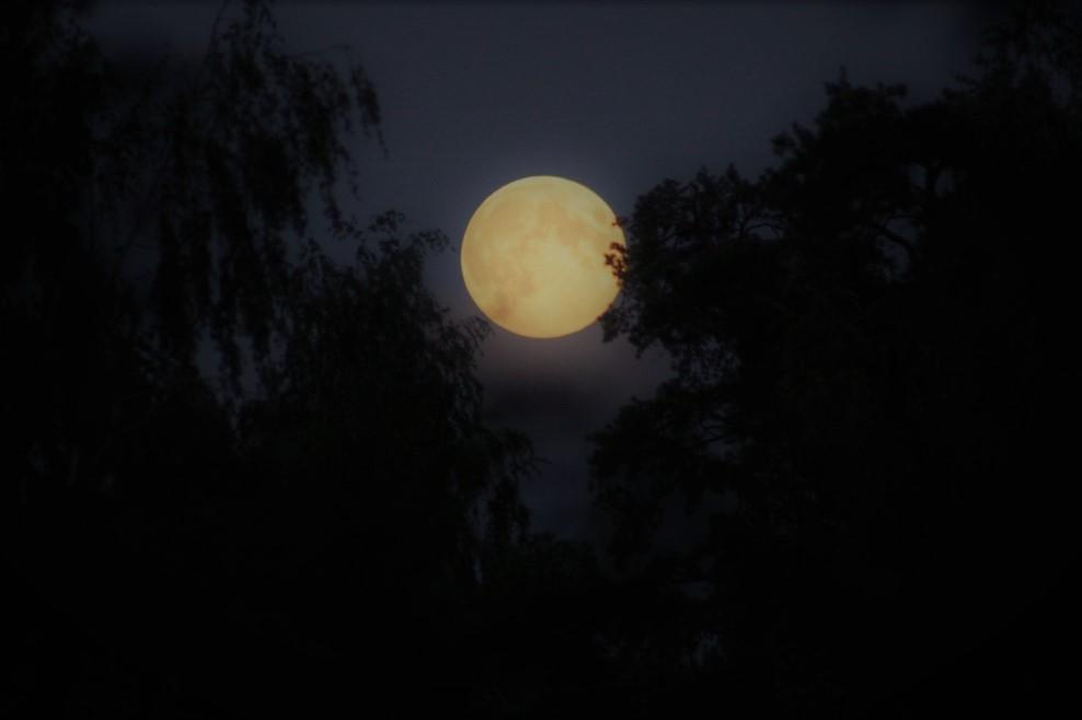 Луна в ветвях запуталась. Блиц: луна