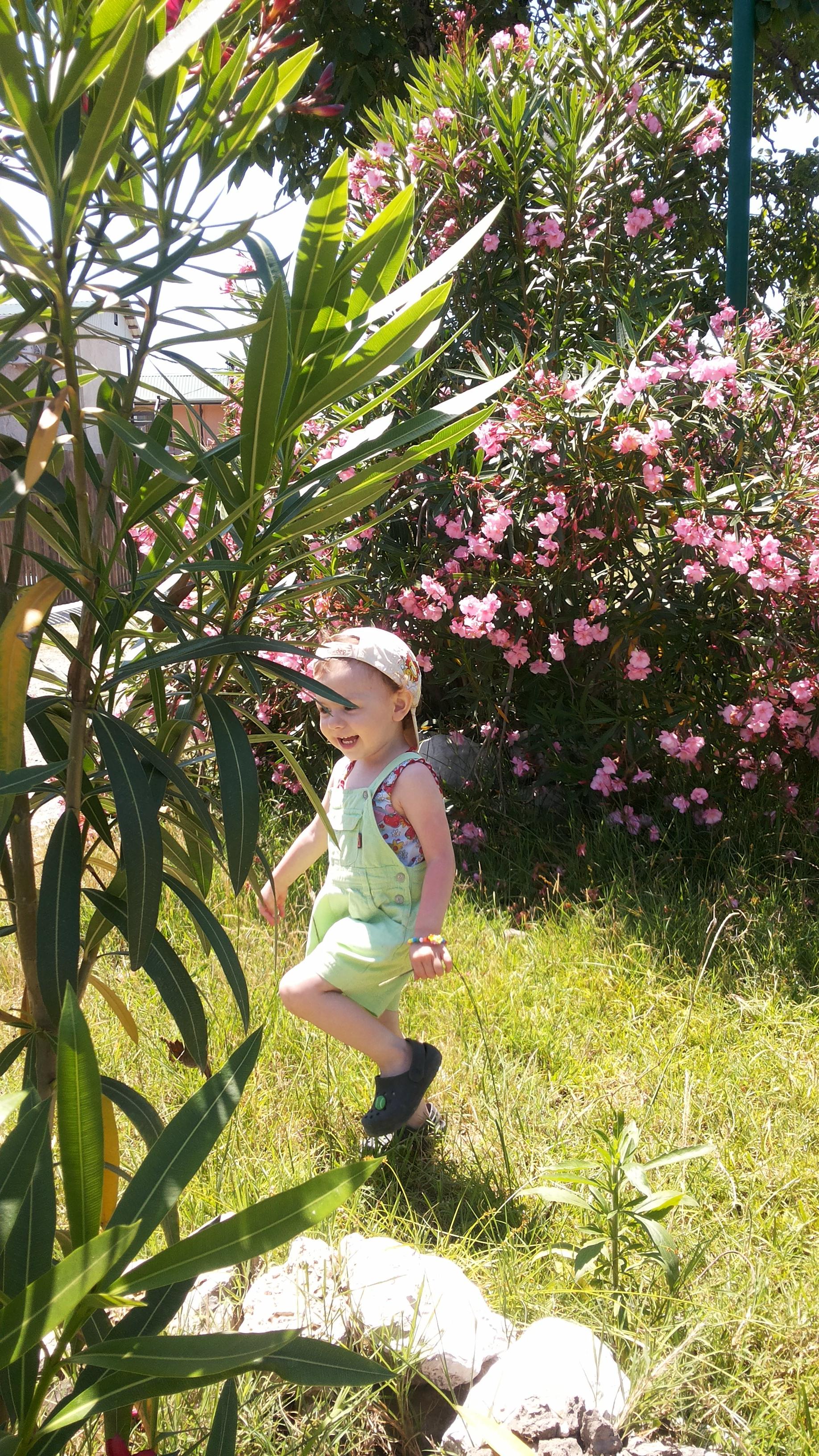 Цветочная прогулка. Летнее настроение