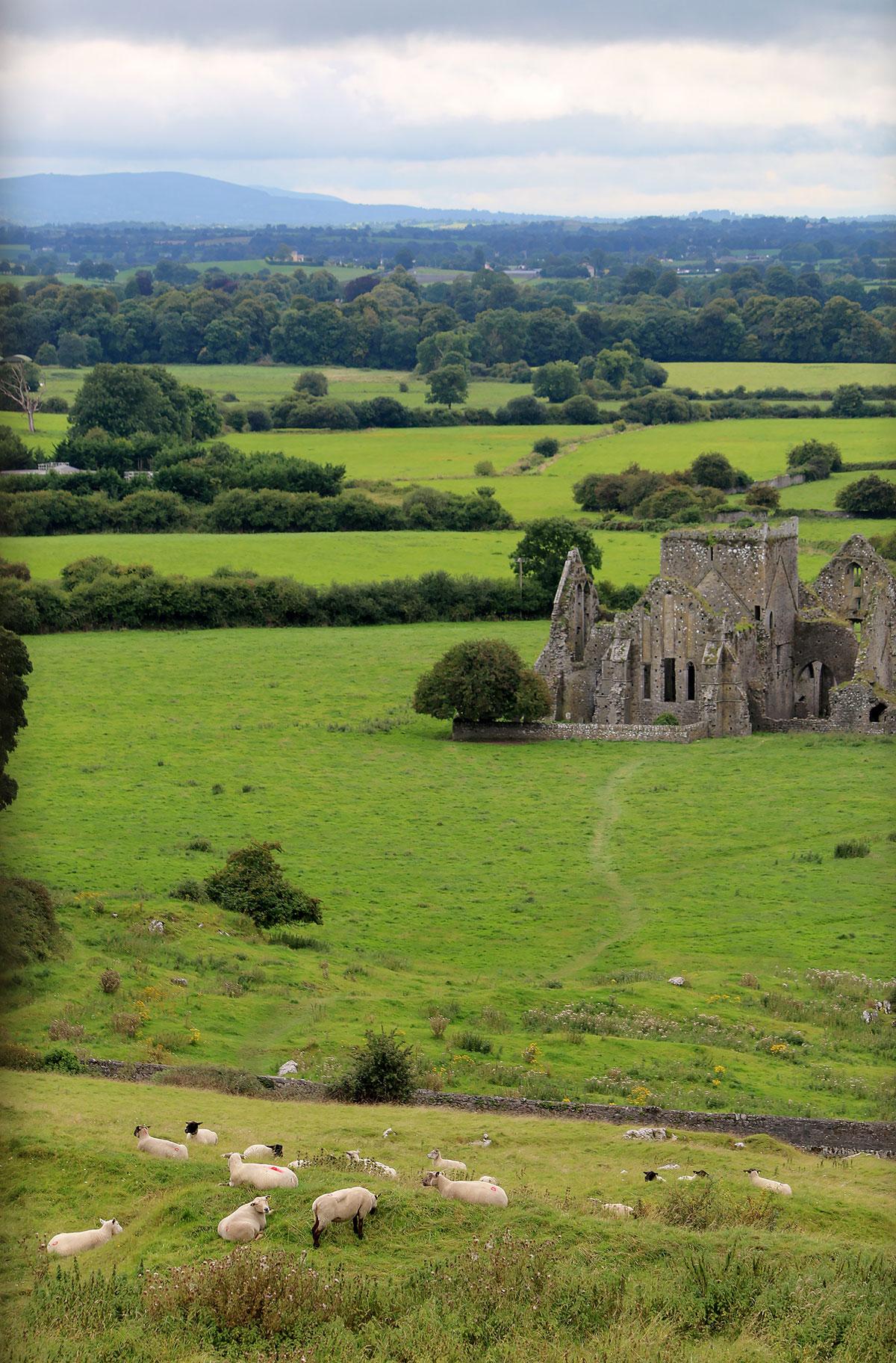 Ирландские ковры. Блиц: с высоты