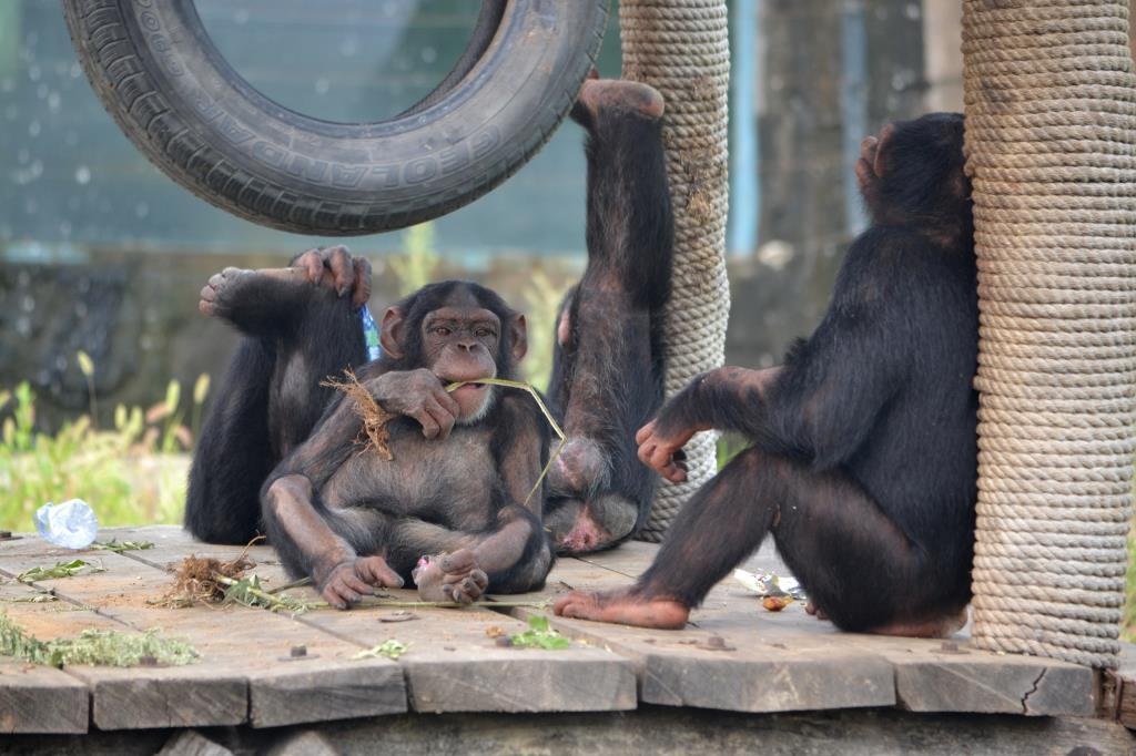 В семейном кругу. Блиц: зоопарк