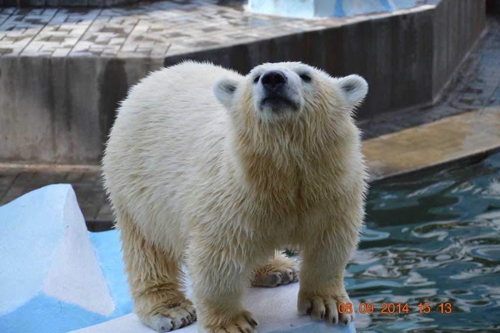 Белый медвежонок. Блиц: зоопарк