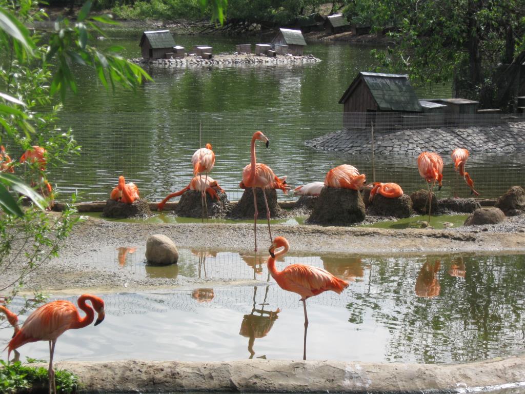 Стоит фламинго в зоопарке.. Блиц: зоопарк