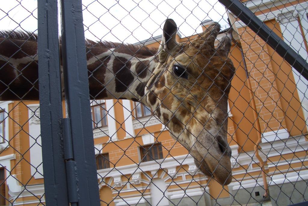 Привет! . Блиц: зоопарк