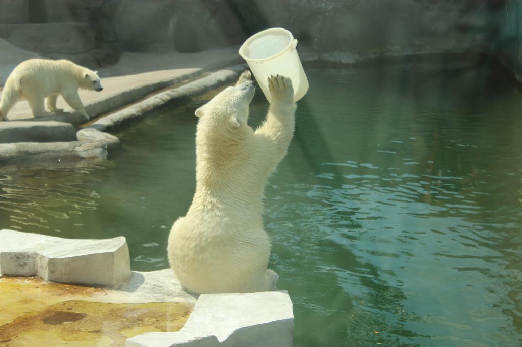 Медвежий волейбол. Блиц: зоопарк