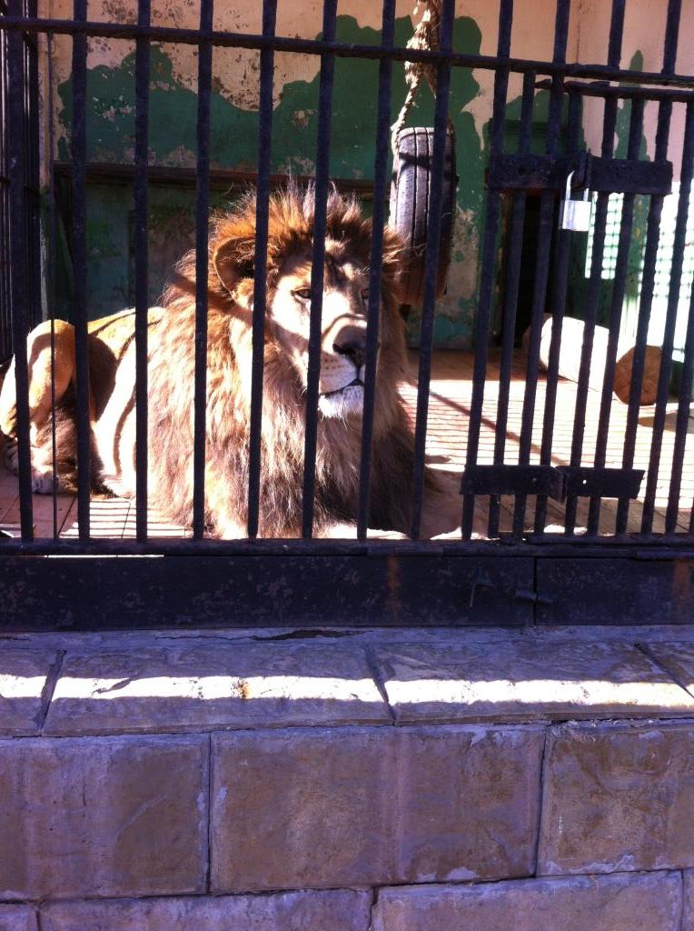 Царь зверей. Блиц: зоопарк