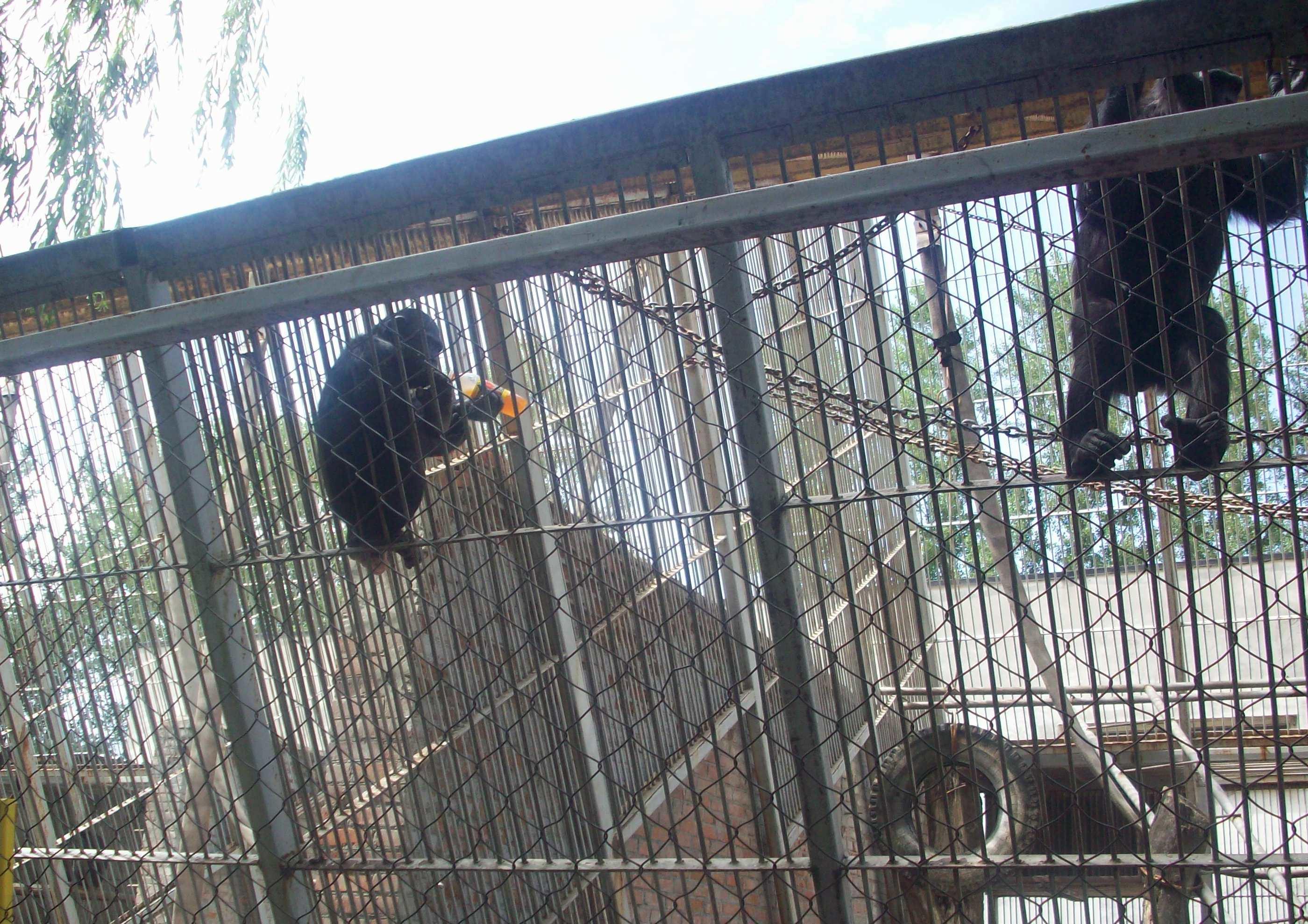 Животных не КОРМИТЬ))). Блиц: зоопарк