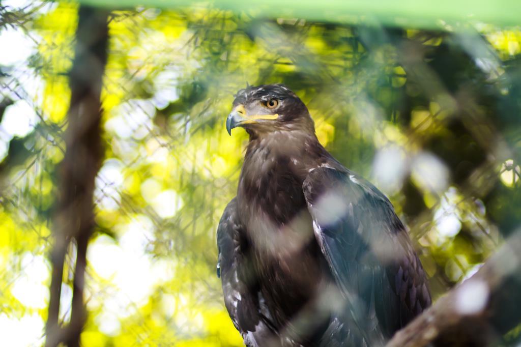 Крылатый Орёл. Блиц: зоопарк