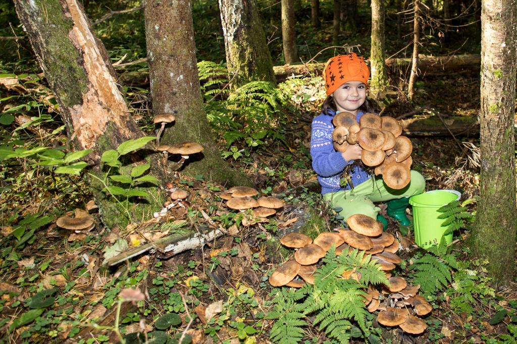 Осенняя пора - грибов очарование!. Краски осени