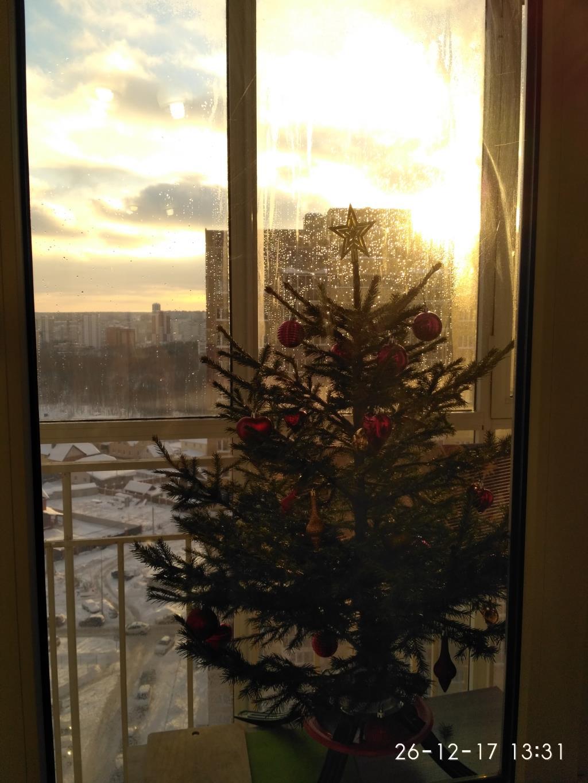 Ёлочка в безопасности. Блиц: новогодняя елка